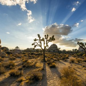 Joshua Tree National Park - photo by Christopher Michel