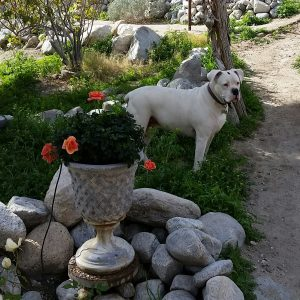 One of Lola's favorite place to be is the garden. RIP