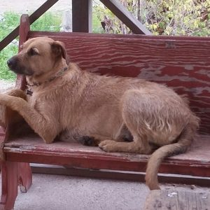 Piero loves the old red wooden bench in the shade