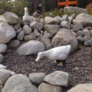 Couldn't help but laugh when a guest asked if the duck eggs we serve for breakfast came from the ones he saw out front