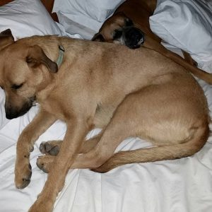 This is what we found in our bed when we got back from serving dinner to guests