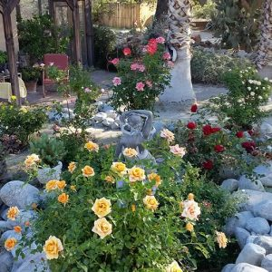 Rose garden blooms